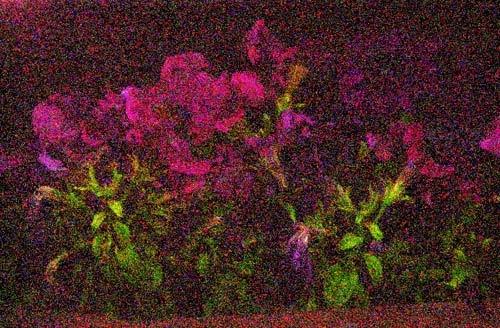 Nighty Flowers by sebough