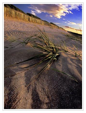 Evening Light, Eden Estuary by bravo charlie