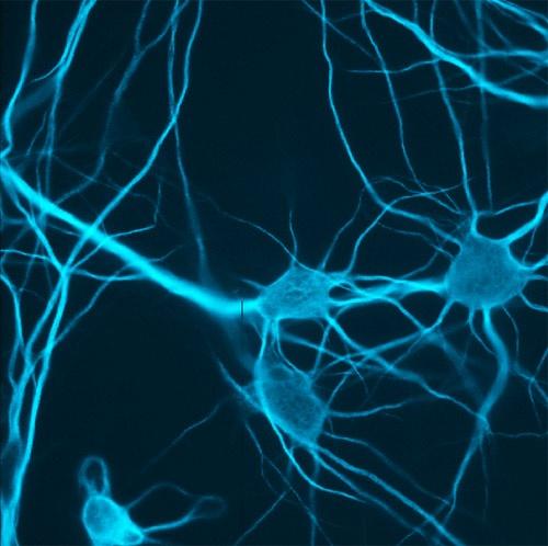 Neurons by jochen