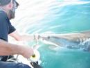 shark touch