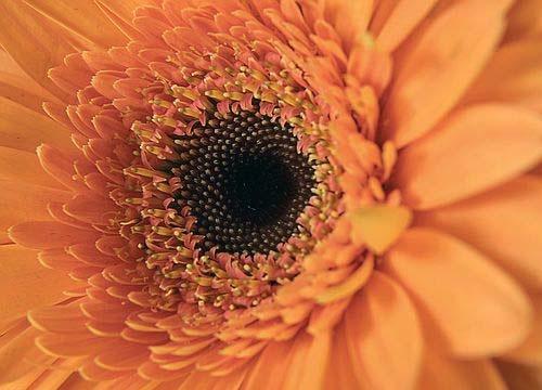 Orange Closeup by chris.maddock