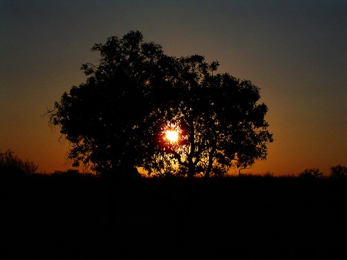 African Sunset by keppy