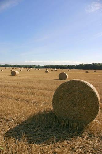 Harvest Time by pjc