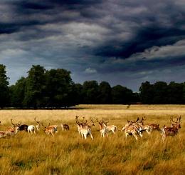 London fauna!