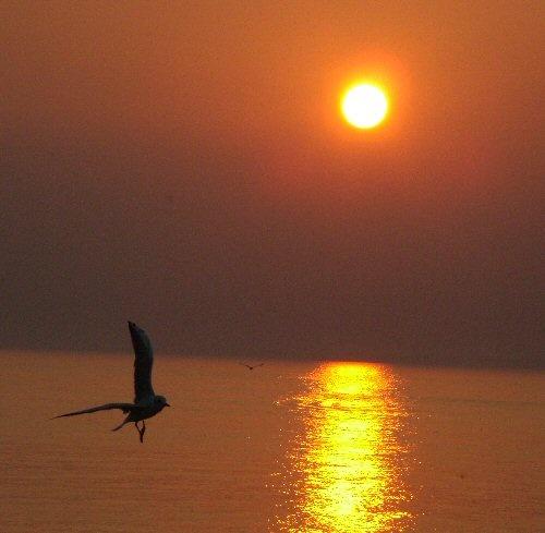 Bird Sunset by carriebugg