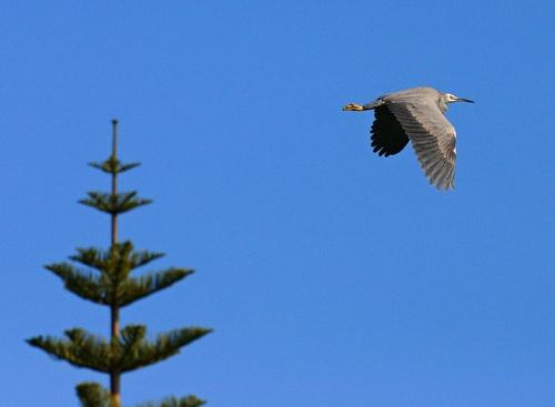 Heron by mazer