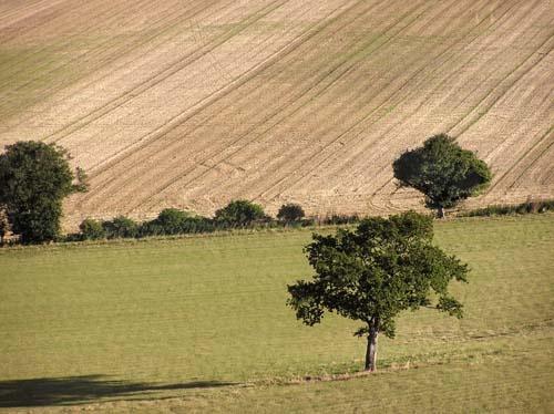 Trees by gazleton