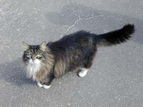 Kitty, kitty... by silvina