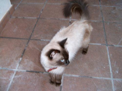 My other cat by angeldani