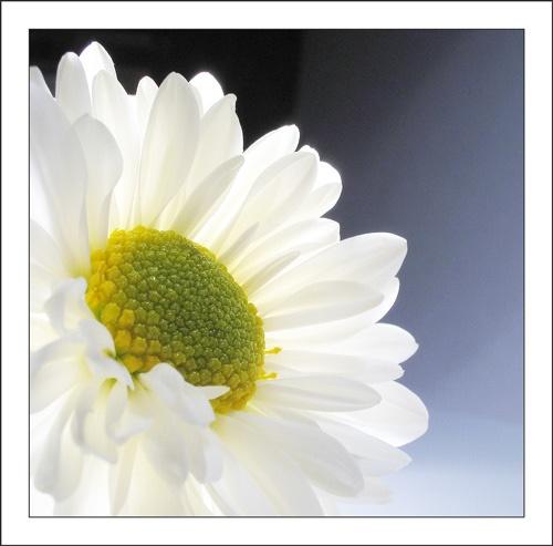 Flower 4 by ejtumman