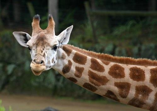Long neck by mazer
