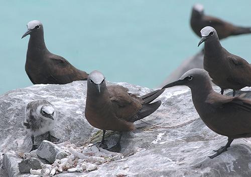 Bird family by shidee