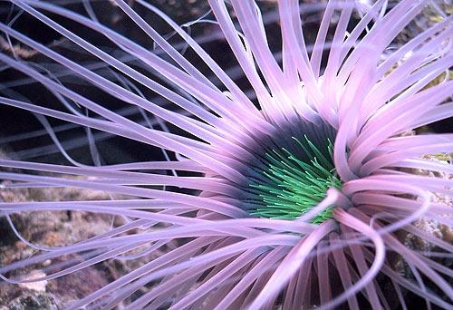tube worm by shidee