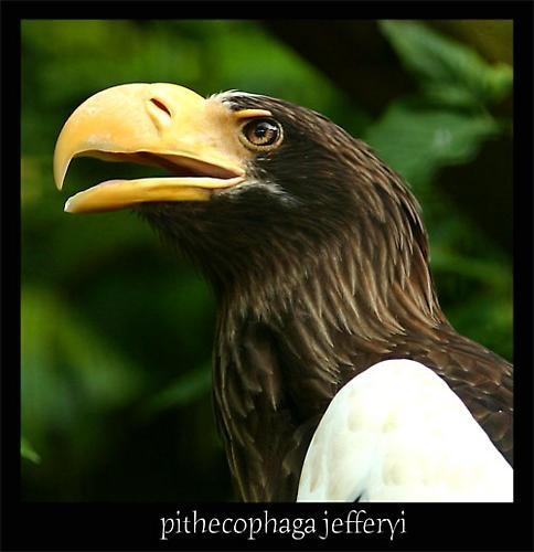 eagle by john4