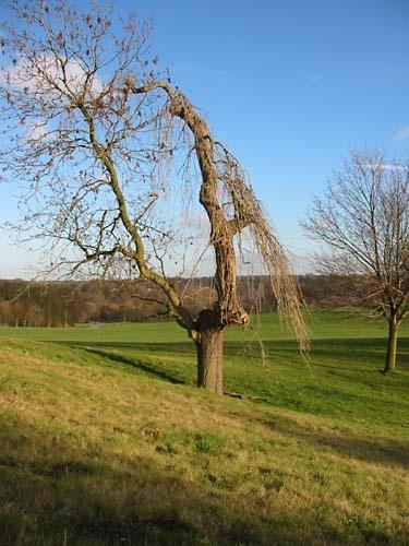 Tree Shot by seven_ninety