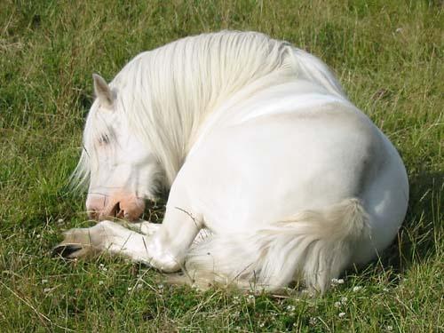 White Horse by seven_ninety