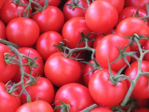 Tomatoes by ferozsanaulla