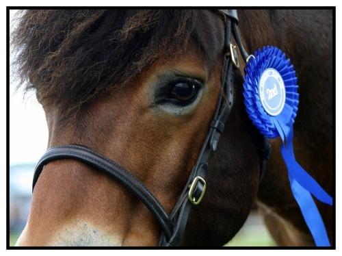 Exmoor Pony by starstriders