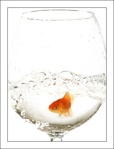 L\'Eau De Goldfish by phototerrorist