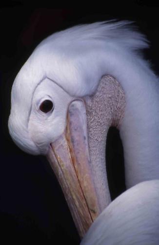 White bird by willf1