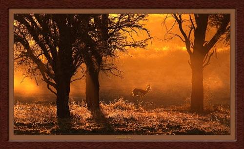 Kalahari Dawn by EOSPETE