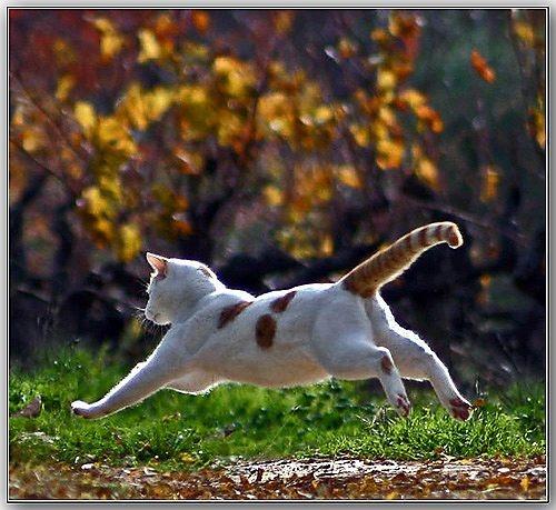 Autumn Leap by celestun