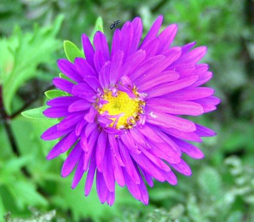 Wild Flower by ahitsjustme