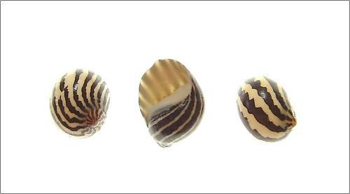Sea Shells by delz