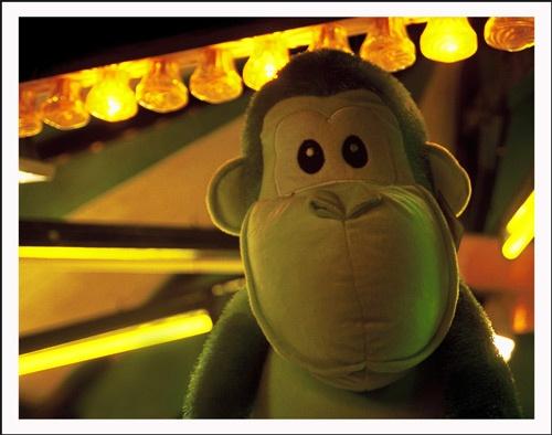 Monkey by stepenowsky