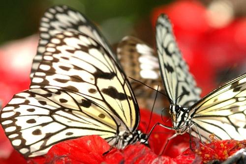 Butterfly 2 by shidee