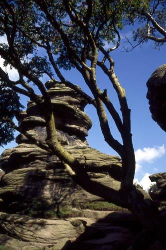 Brimham Rocks by saxon_image