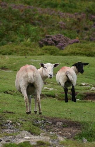 Who ewe lookin\' at by muddymoose