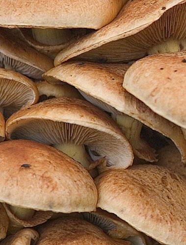 Mushroom Squash by AdrianTurner