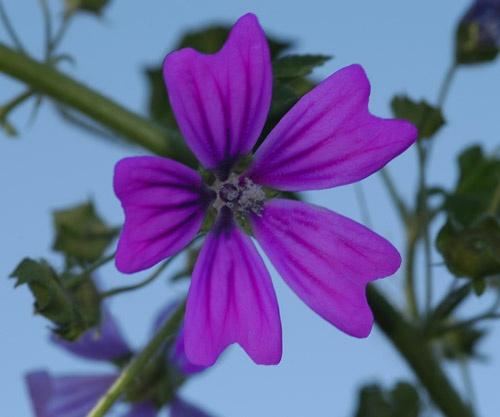 Wild flowers by demetrio
