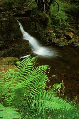 Little Waterfall by jond