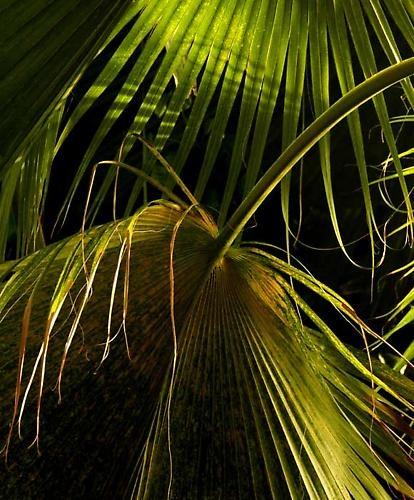 ancient palms by john p