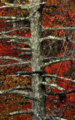 Lichen by drlesser