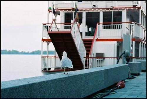 Out to Sea by kadisu