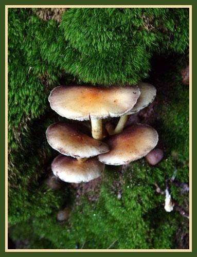 Mushroom Falls by alison duckett