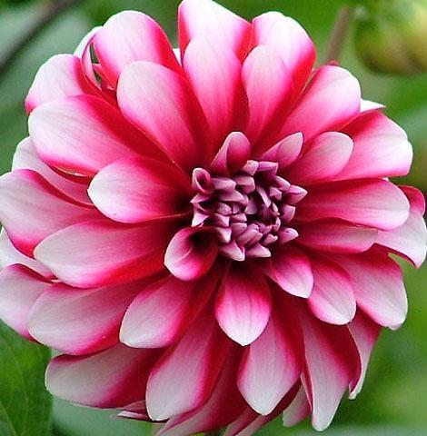 Bloom by leedewey