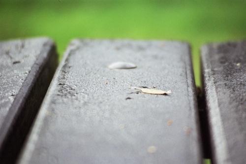 Dew on Bench by fredforsyth