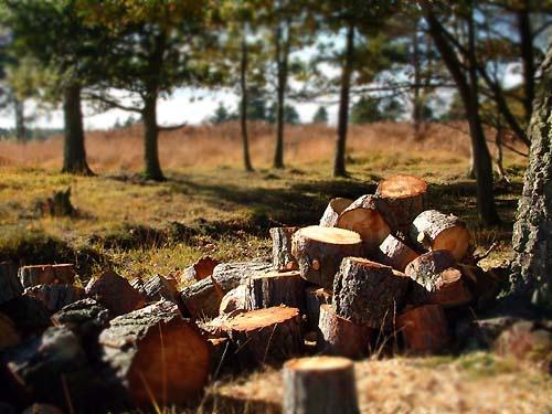 Chopping Logs by davecalver