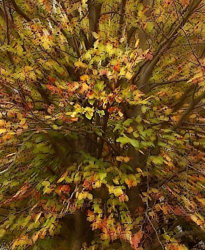 Autumn Burst by abraxas
