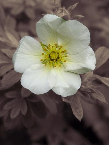 Flower by blizz