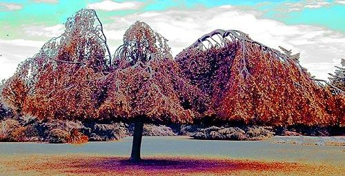 Balance of nature by IanA