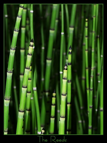 The Reeds by bradp