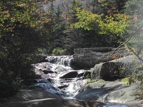 bear stream by 53  squirrel