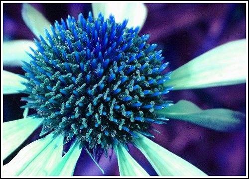 Blue Flower by jon1169