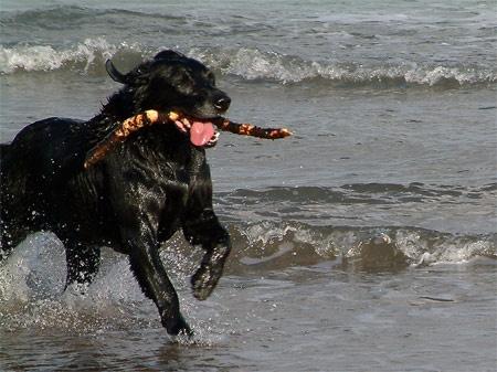 Fetch by jonc