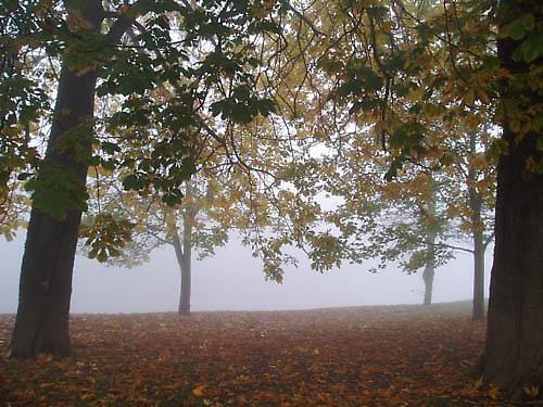 Fog warning...... by Dinda